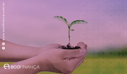 Créditos de carbono; como o Brasil participaria desse mercado bilionário?